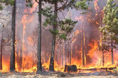 Preventing Wildfires: 6 Things You Need to Know