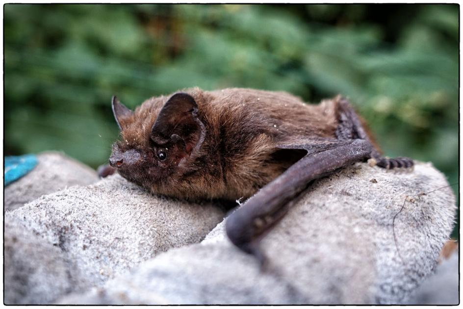 Rabid bat found in Colorado county, first of 2021 - OutThere Colorado