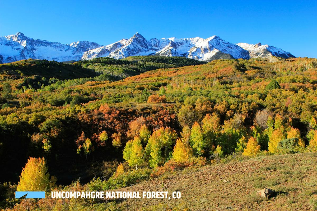 By the Numbers: Colorado's 11 National Forests