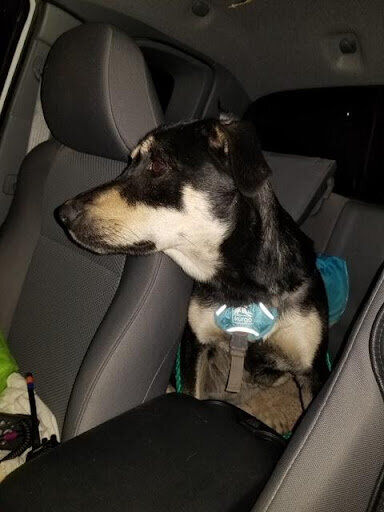 Colorado dog rescued after 5 days lost in the rocky mountains