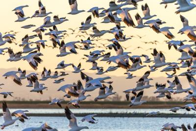 Thousands of birds are about to flood this Colorado town