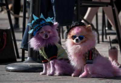 Cute dogs in costumes at Howl-a-Ween Pet Parade on Union Station