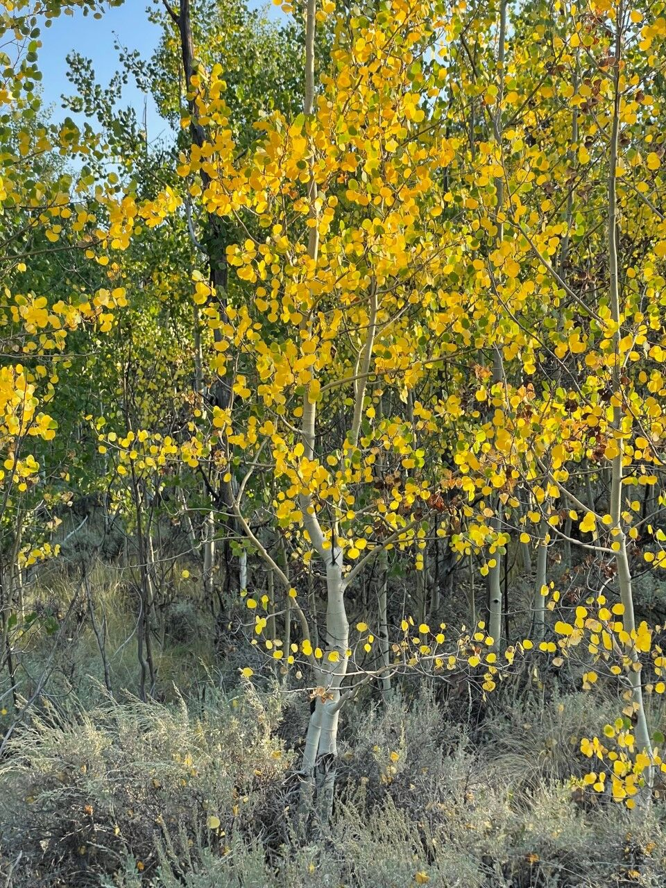 Fall colors starting to show in Twin Lakes. Photo Credit: Spencer McKee.