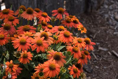 Annual Fall Gardeners' Festival to be held soon