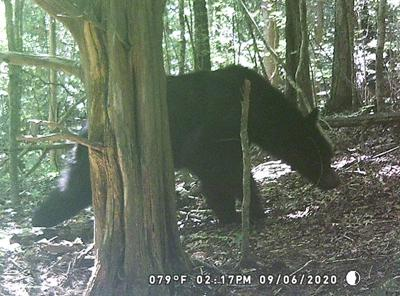 Bear sighted just off of Monterey Highway