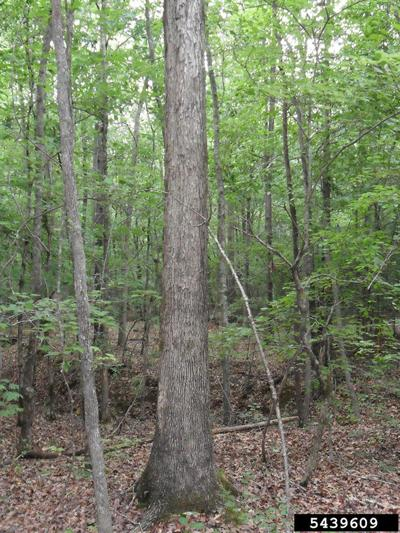 Timber theft cases reported across state