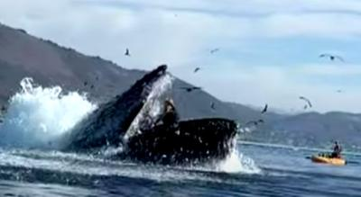 Kayakers have whale of a tale