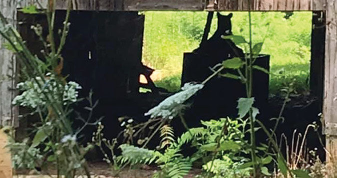 Bear sighted on farm in Palestine Road area