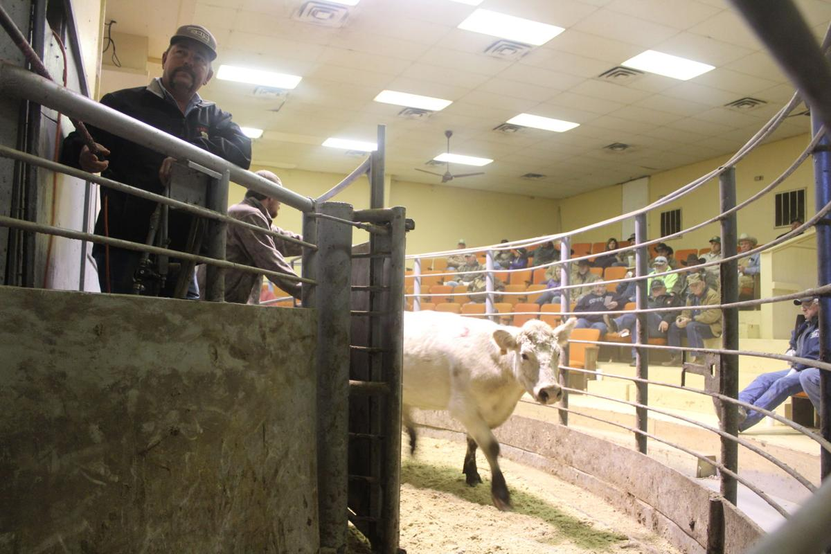 A 70 year tradition, the Panola Livestock Auction helps area