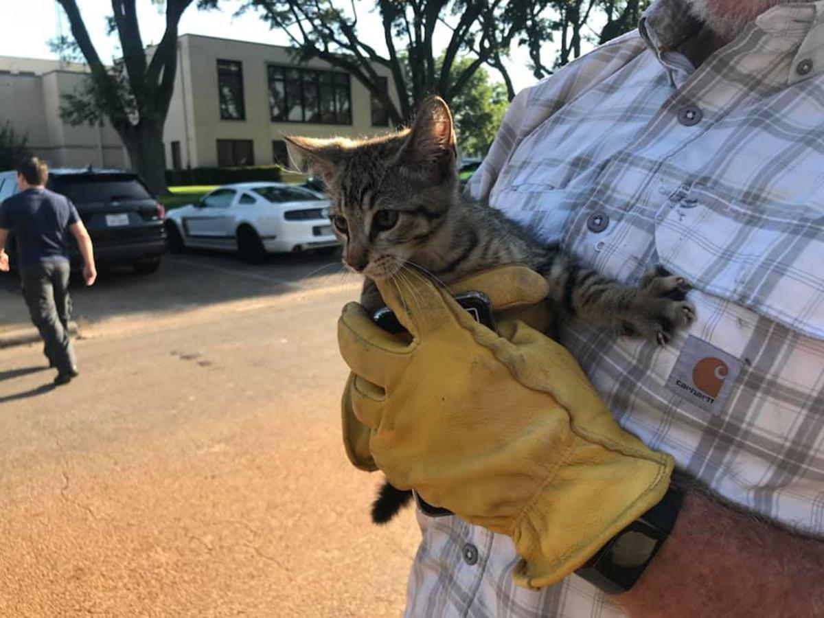 Panola County Sheriff's Office conducts 'Operation Rescue Kitty'