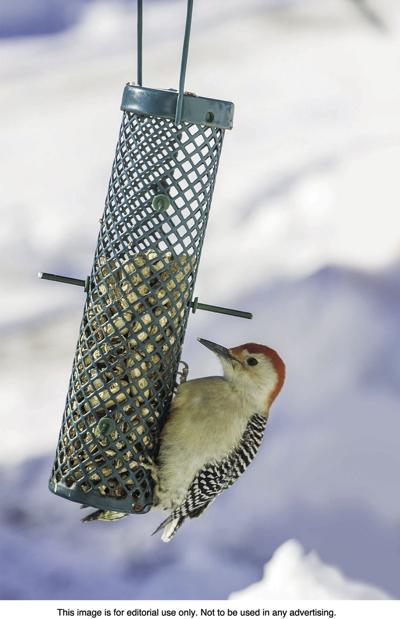 The different types of bird feeders