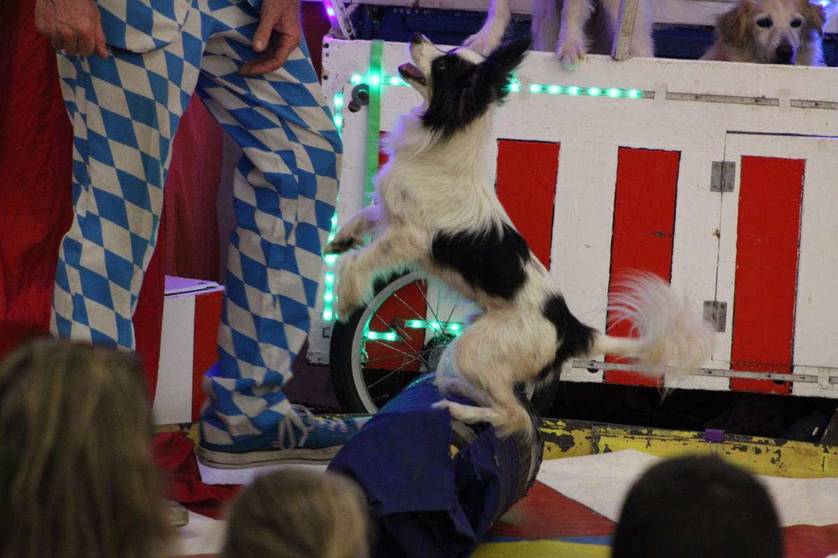 circus chicken dog
