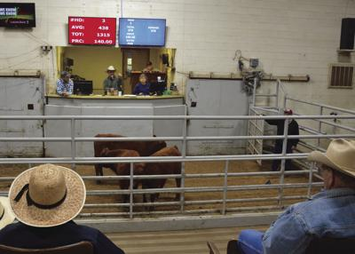 Pandemic is impacting     cattle prices for producers