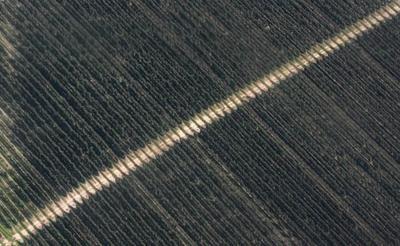 COVID-19 devastating B.C. fruit growers, threatens food security: association