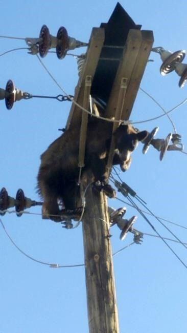 Bear found stuck on power pole in southern Arizona city