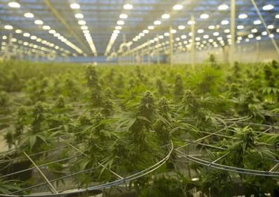 Hexo to launch low-cost cannabis product to undercut illicit market shops