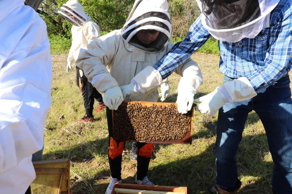 Maconaquah brings bees to campus