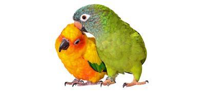 The Importance of Breeding Birds