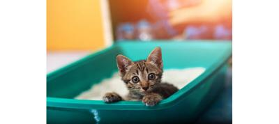 The Latest Trends in Cat Litter