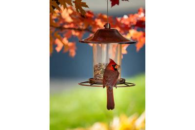 Cardinal bird on a bird feeder