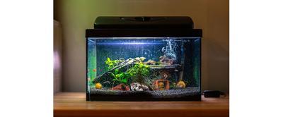 Aquarium Lighting Essentials