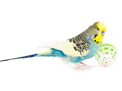 Bird Toys and Playgrounds