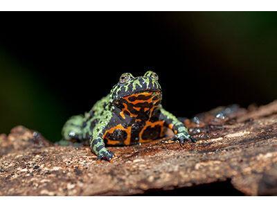 A Focus on Aquatic Amphibians
