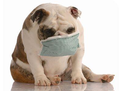 Can Pets Catch the Coronavirus?