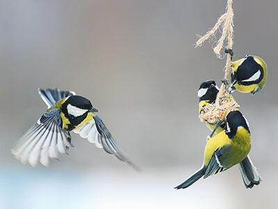 Wild Bird Products