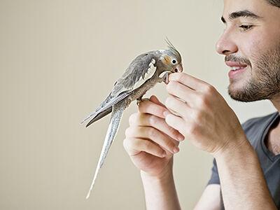 Avian Actions