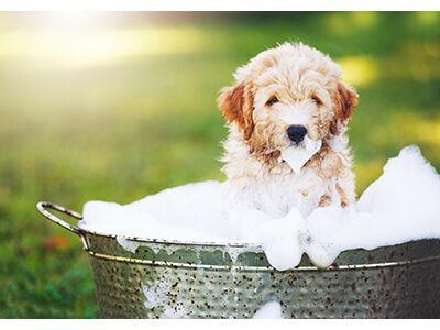 Dog Home Bathing Essentials