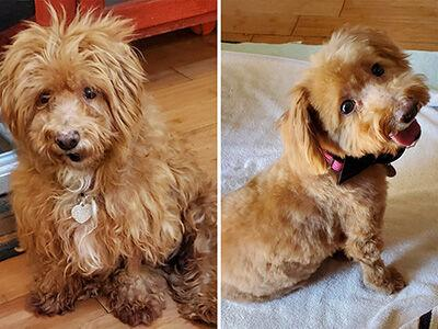 Wahl Shelter Dog Makeover.jpg
