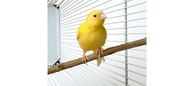 Bird Cage Liners and Litters