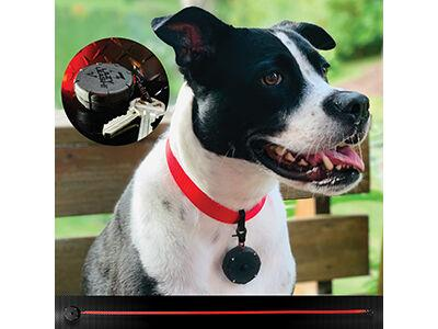 brody-clip-small-retractable-leash-dog-tiny-mini-clip-on-wearable.jpg