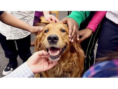 Can Dogs Transmit Coronavirus?