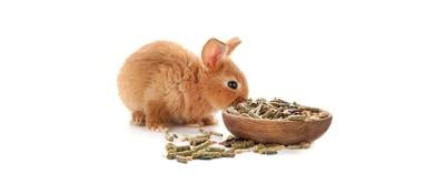 Small Animal Diets