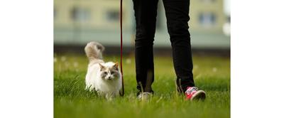 Cat Collars, Leashes and Harnesses