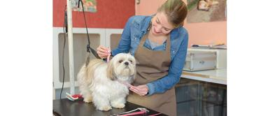 Safety Tips for Grooming Salons