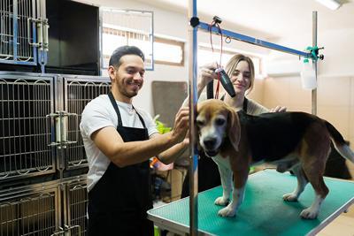 Professional groomers finishing bathing a cute dog