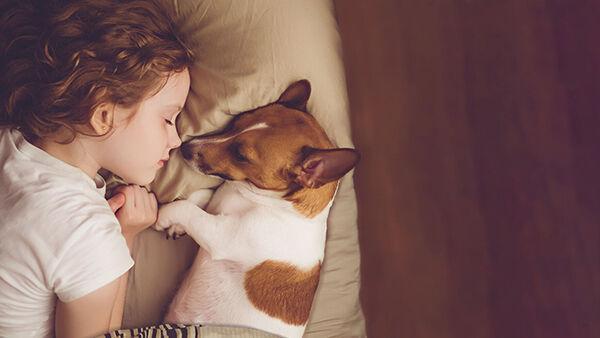 Understanding Today's Pet Owner