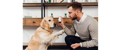 Finding the Right Supplements For Pets