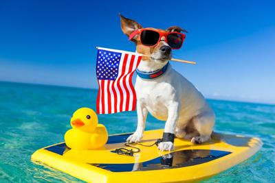 dog at the beach, made in USA