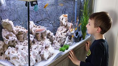Child,Watching,Fish,Tank.,Aquarium,With,Cichlids