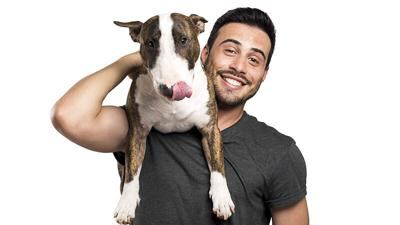 Bull-terrier and his owner