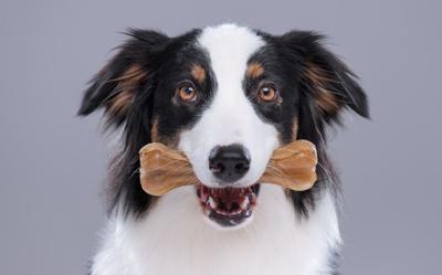 dog with a chew.jpg