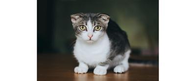 Stopping A Cat's Problem Behaviors
