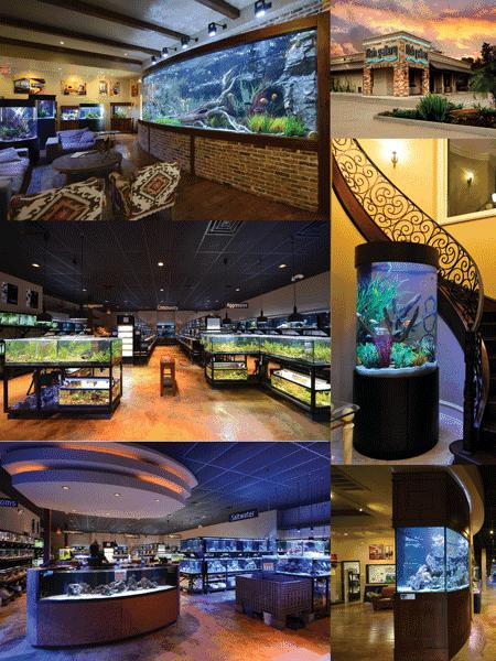 The Aquarium Experience