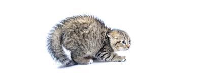 Cat Calming Aids & Behavior Control