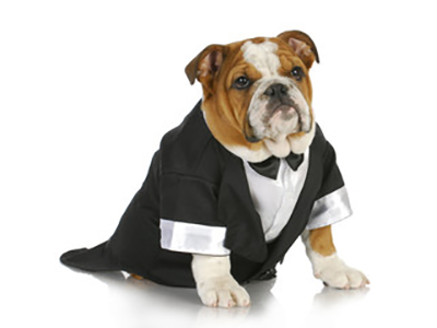 How Pets Are Affecting Wedding Plans