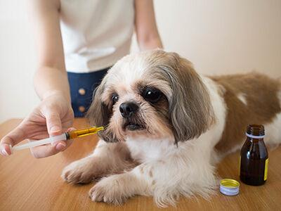 Supplements and Remedies for Dogs